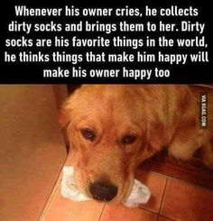 Dogs have got to be the sweetest, most compassionate pets. #dogs #doglovers