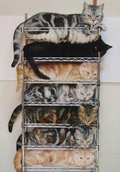 Because no one likes a disorganized pile of kitties - Imgur