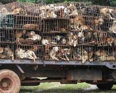 Dogs are skinned alive and left to slowly die, all to obtain their skins to be used for leather to make things such as drums and golf gloves...These dogs go through an incredibly excruciating ordeal before they die...This is going on in Thailand (then smuggled into Laos and China).  PLEASE TAKE ACTION and sign petition here http://forcechange.com/115423/stop-killing-dogs-for-usage-of-dog-leather/