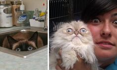 Cats Who Have The Best Face When They Realize You Took Them To The Vet - 9GAG
