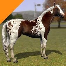 realistic horse games # 29