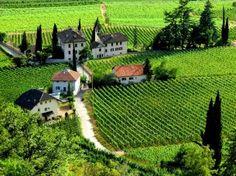 vineyards - Terlan , Trentino-Alto Adige Südtirol, Italy
