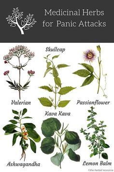 Herbs for Panic Attacks and Anxiety Treatment