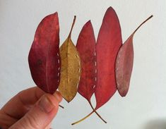 Leaf Stitching is part of an ongoing exploration of stitching with found items. Leaves are collected whilst walking and either pressed and dried for future use, or they are used whilst still fresh....
