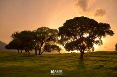 landscape Sunset tree photo by Abdelmusawwir  https://www.facebook.com/  http://500px.com/AbdelmusawwirPhotos