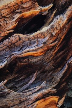 Ancient Flames by Michelle Espera Rojas - Photo 114954189 / Wood Tile Texture, Bristlecone Pine, Wood Bark, Organic Art, Close Up Photography, Wooden Textures, Tree Bark, Photo Tree, Nature Animals