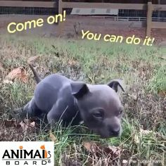 Rescued & Recovery story of dog Kind Family Rescued this cute puppy and gave a new life. Cute Funny Animals, Cute Baby Animals, Funny Dogs, Animals And Pets, Cute Puppies, Cute Dogs, Dogs And Puppies, Doggies, Gato Gif