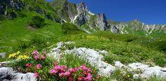 Deutschland Allgäu Balderschwang - Urlaub mit eigener Anreise bei Tchibo Reisen