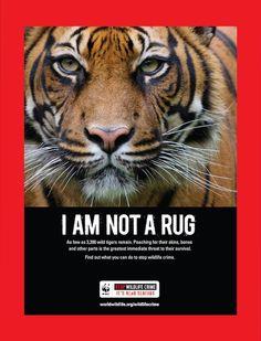 World Wildlife Fund posters.