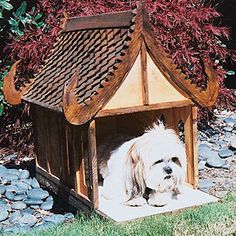 For the dog who thinks he's a god (maybe this would be more appropriate for cats?).     Creative doghouse designs   Sunset.com