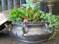 Succulents and Silver