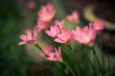 Vintage Flowers | Flickr – Compartilhamento de fotos!