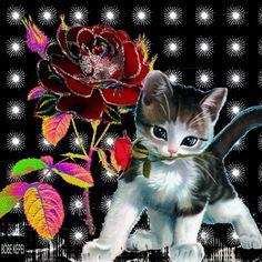Pretty Cats, Beautiful Cats, Beautiful Roses, Beautiful Images, Animals Beautiful, Cute Animals, Good Morning Animation, Good Morning Gif, Good Night Greetings