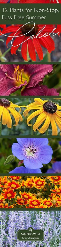 Come the dog days you may be hot, sticky, and over it, but by choosing perennials that are low-maintenance with long bloom seasons, your garden will still be happily flowering well into fall.