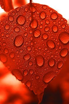 if @partyforacause is a #Mumma ever mindful of slowing down enough to let her kiddies stop and see the beauty in nature, like droplets on a #red autumnal leaf - then she'll know she's on the right path!