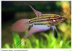 Reproduccion de los peces yahoo dating