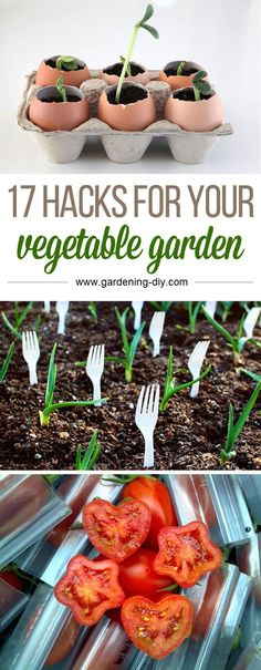 Here are 17 fun and clever vegetable garden hacks to help make your garden more successful this year! These are brilliant! I've been staring at our empty