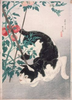 Takahashi Shōtei (Hiroaki) (Japan, 1871-1945) - Cat with Tomato Plant - Color woodblock print, Japan, August 1931