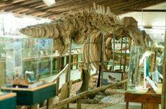 Cetaceos marinos, gigantes del mar, esqueletos de ballenas, delfines, tiburones, fotografías y mucho mas en una de las salas del museo