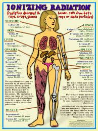 The effects of radiation on the human body.