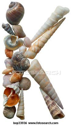 seashell k