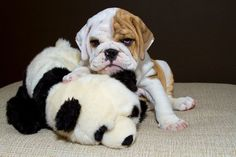 This lil' grump who totally understands when you're not in the mood for anything. | 17 Puppies For Anyone Who's Having A Bad Day