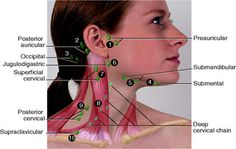 Location of Lymph Nodes in Neck