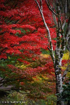 Mountain's Autumn by WindyLife Kikuchi Ravine, Kumamoto, Japan. http://www.deviantart.com/art/Mountain-s-Autumn-102993544