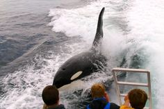 Six to seven hours whales watching trips depart Savona at 10am from July to September. #Italy #Liguria #Savona #Whale