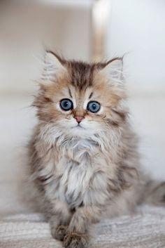 kitty---want!!!