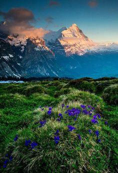 Grosse Scheidegg, Switzerland - by David Birri