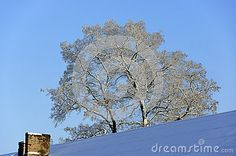 The snow-covered roof of residental house and old snowy acacia against the blue sky at winter.  #winter