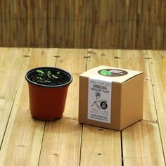 The Delightful Sensitive Plant Kit by plantsfromseed. Explore more products on http://plantsfromseed.etsy.com