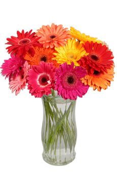Gerber Daisy Centerpieces #wedding, #weddings, #pinsland, https://apps.facebook.com/yangutu