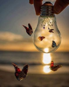 A fun image sharing community. Explore amazing art and photography and share your own visual inspiration! Creative Photography, Amazing Photography, Nature Photography, Butterfly Wallpaper, Galaxy Wallpaper, Cute Wallpaper Backgrounds, Cute Wallpapers, Pac E Mike, Beautiful Nature Wallpaper