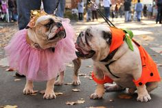 halloween outfits for dogs | Between the strange costumes, crowded Halloween bashes and the ...