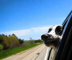 This could possibly be the most adorable road trip buddy we've seen. Be sure to check out the other great road trip photos our readers have sent to us!
