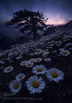Falling Into Darkness by Bruno_Pisani_97 with twilightpollinobruno pisanimythlands