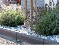 Garden, Plants, Garten, Gardening, Plant, Outdoor, Gardens, Yard, Planting