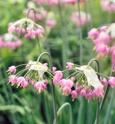 25 top easy care plants for midwest gardens garden ideas for Pretty low maintenance flowers