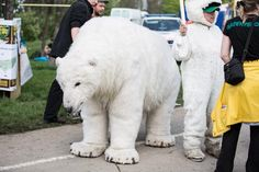 Polar bears for medical marijuana.