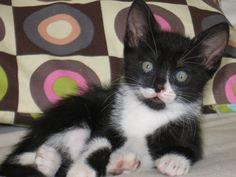 Zorro a little cat homless