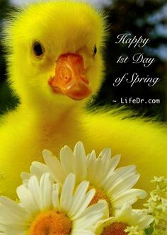 Happy 1st Day of Spring 2013   ~ LifeDr.com