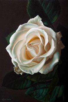 Rose by Vincent Keeling