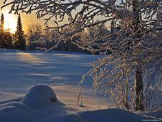 Frozen beauty by aplog1