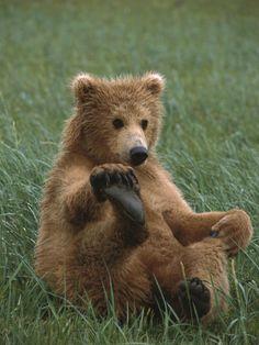 Grizzly bear by Suzi Eszterhas