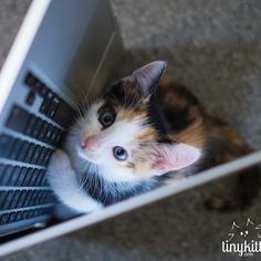 Kittens at work == huge boost in productivity.  Tell your boss. http://TinyKittens.com