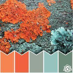 Image result for coral orange blue gray color palette