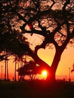 The sun in a #Heart tree. I could sit and stare at the sunset!