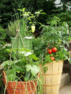 Growing Vegetables In Pots Growing vegetables in pots is an excellent idea if you have a limited space, starting your own container vegetable garden gives you a chance to produce a bountiful harvest of edibles that are freshest and tastiest! Growing Vegetables In Containers, Growing Veggies, Container Gardening Vegetables, Vegetable Gardening, Garden Container, Vegetable Basket, Growing Plants, Herb Garden, Lawn And Garden